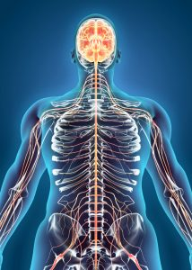chiropractic care for nervous system